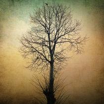Waltz of a tree by zapista