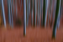 Blurred autumn forest by Thomas Matzl