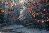 'Winterparadies am Flusslauf' by elio-photoart
