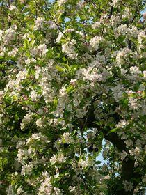 Duftende Blüten by rosi-hainz