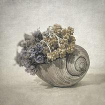 Seashell nO.2 von zapista