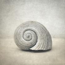 Seashell von zapista