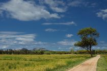 Weg durch Reisfelder by Iris Heuer