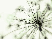 Macro Detail Winterwonderland in black and white by salogwynfineart