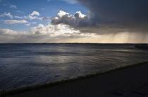 Holländischer Schwanen Sound by captainsilva