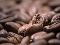 Coffe Grane by Gustavo Concepción