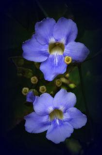 Blaue Blume von Iris Heuer