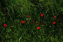 Zwischen dem Grün by Bastian  Kienitz