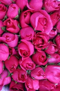 Roses von Tricia Rabanal