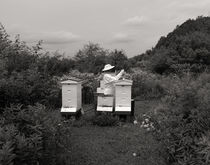 Bee Keeper,  Upstate NY 2016 von Joseph R. Duba