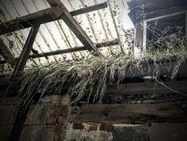 verlassener Stall by Andrea Meister