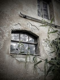 Am Fenster by Andrea Meister