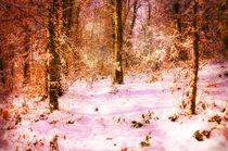 Buchen im Schnee von Nicc Koch