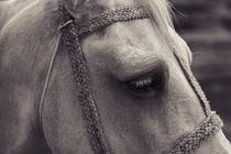Horse by Gustavo Concepción