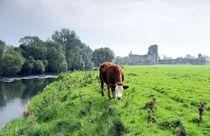Athassel on the River Suir. Tipperary, Ireland von David Lyons