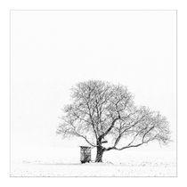 Der Baum von foto-m-design
