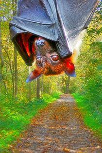 Flugfuchs im Wald 2 von kattobello