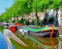 Pelikan in Amsterdam 2 von kattobello