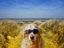 Nordsee Urlaub von kattobello