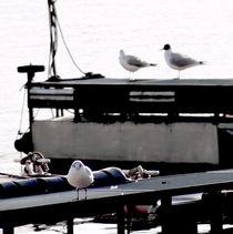 A seagulls life by salogwynpictureart