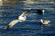 Free life of a seagull by salogwynfineart