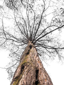 Baum im Nebel by Nicole Bäcker