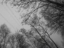 Baumkronen im Nebel von Nicole Bäcker
