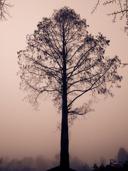Im-nebel