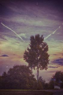 Miracle Sky by Chris Mari