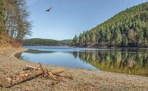 See und Wald im Sonnenlicht by micha-trillhaase-fotografie