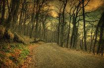 Path III by zapista
