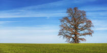 Tree 141417 by Mario Fichtner