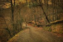 Path by zapista