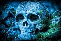 Skull von Dr. Werner Csech