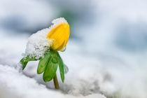 Frozen I von Bettina Dittmann