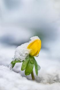 Frozen II von Bettina Dittmann