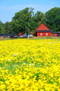 Blühendes Schweden von Bruno Schmidiger