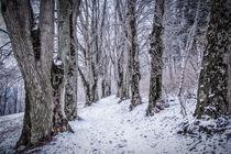 Lindenallee bei Inzigkofen im Winter - Naturpark Obere Donau von Christine Horn