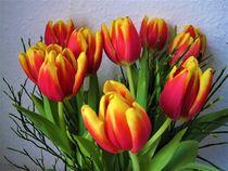 rote-gelbe Tulpen von assy