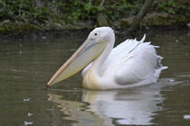 Pelikan von Erika Wagner