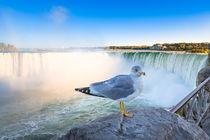 Möwe an den Niagarafällen - Seagull at the Niagara Falls by Wolfgang Gürth