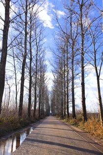 Dutch road. Sunny way. von Galina Solonova
