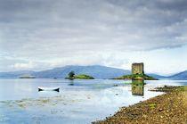 Castle Stalker on Loch Linnhe. Summer by David Lyons