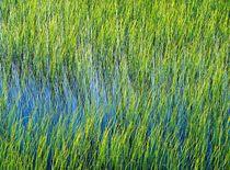 Mountain tarn. Summer von David Lyons