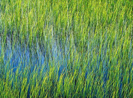 Texture-reeds-01-16-copy