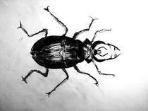 Käfer von coco coconing