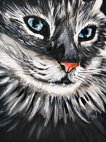 Sally The Cat by Angelo Pietrarca