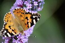 Nature's Butterflies by Bianca Baker