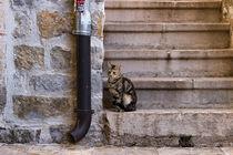 Katze auf einer Steintreppe by Denis Sandmann