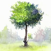 Tree Study by zapista
